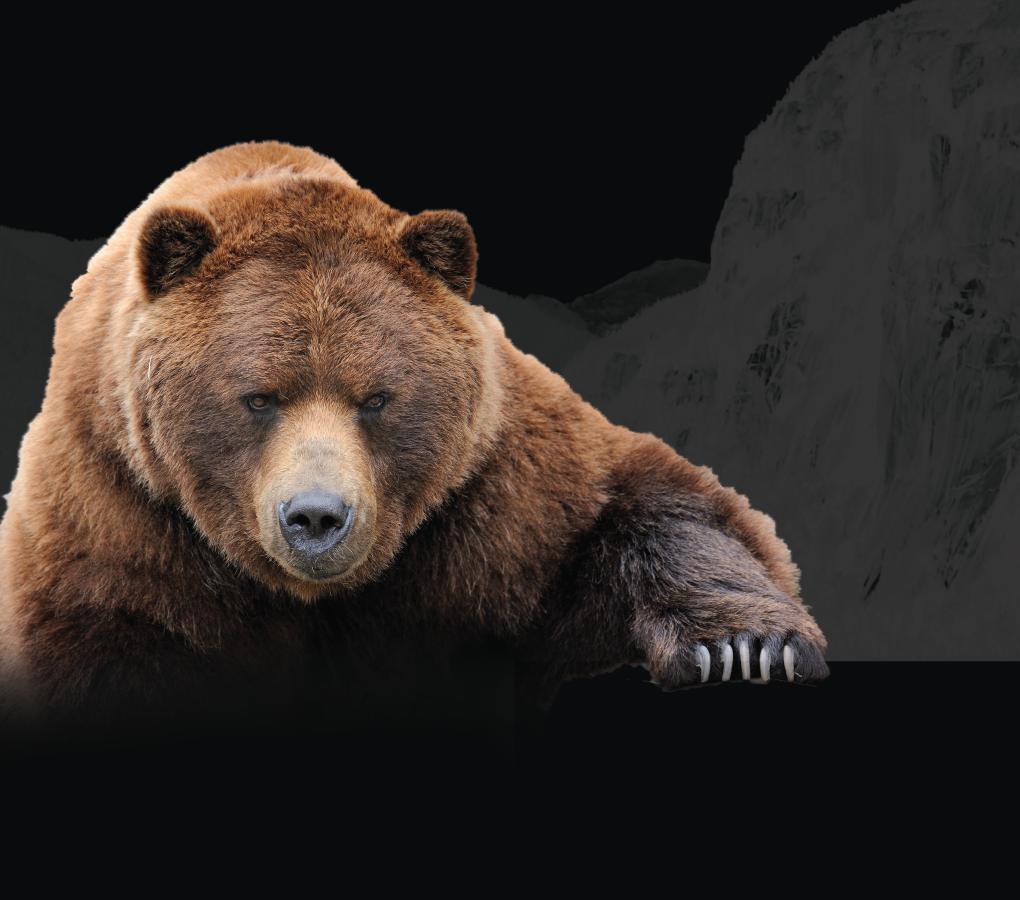 mobile bear banner with mountain background